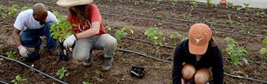 Real Food Farm Volunteer Day
